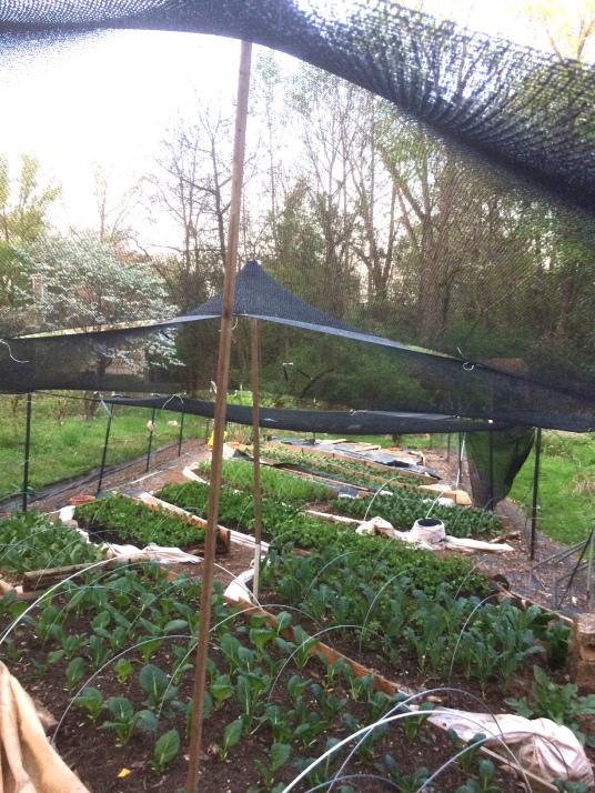 spring garden 2015 lightened